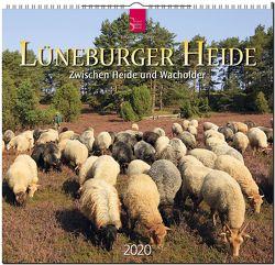 Lüneburger Heide – Zwischen Heide und Wacholder von Scheibner,  Johann