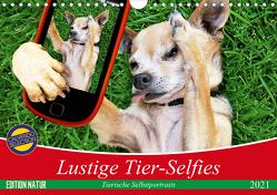 Lustige Tier-Selfies. Tierische Selbstportraits (Wandkalender 2021 DIN A4 quer) von Stanzer,  Elisabeth