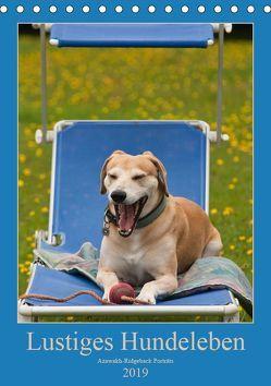 Lustiges Hundeleben – Azawakh Ridgeback Porträts (Tischkalender 2019 DIN A5 hoch) von Bölts,  Meike