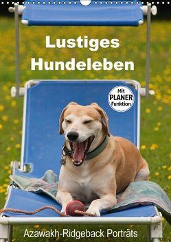 Lustiges Hundeleben – Azawakh Ridgeback Porträts (Wandkalender 2018 DIN A3 hoch) von Bölts,  Meike