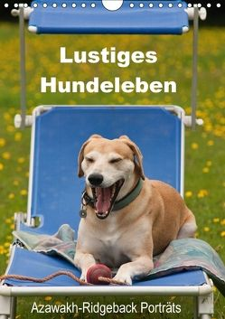 Lustiges Hundeleben – Azawakh Ridgeback Porträts (Wandkalender 2018 DIN A4 hoch) von Bölts,  Meike