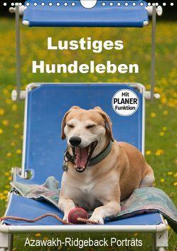 Lustiges Hundeleben – Azawakh Ridgeback Porträts (Wandkalender 2019 DIN A4 hoch) von Bölts,  Meike