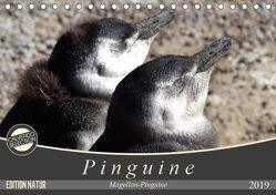 Magellan-Pinguine (Tischkalender 2019 DIN A5 quer) von Flori0