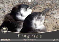 Magellan-Pinguine (Wandkalender 2019 DIN A4 quer) von Flori0