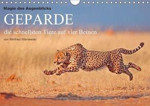Magie des Augenblicks – Geparde – die schnellsten Tiere auf vier Beinen (Wandkalender 2018 DIN A4 quer) von Wisniewski,  Winfried