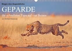 Magie des Augenblicks – Geparde – die schnellsten Tiere auf vier Beinen (Wandkalender 2020 DIN A3 quer) von Wisniewski,  Winfried