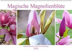 Magische Magnolienblüte (Wandkalender 2019 DIN A2 quer) von B-B Müller,  Christine