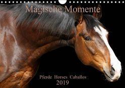 Magische Momente – Pferde Horses Caballos (Wandkalender 2019 DIN A4 quer) von Eckerl Tierfotografie www.petraeckerl.com,  Petra