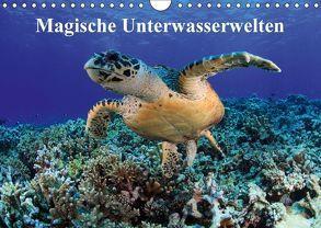 Magische Unterwasserwelten (Wandkalender 2018 DIN A4 quer) von Hablützel,  Martin