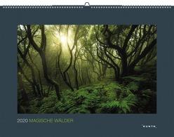Magische Wälder 2020 von KUNTH Verlag