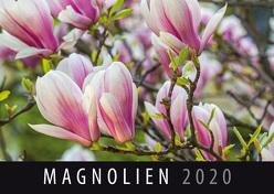 Magnolien 2020 von Quelle & Meyer Verlag