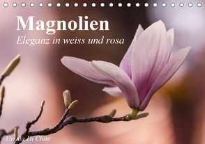 Magnolien – Eleganz in weiss und rosa (Tischkalender 2020 DIN A5 quer) von Di Chito,  Ursula