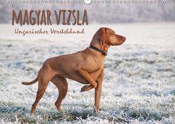 Magyar Vizsla – Ungarischer Vorstehhund (Wandkalender 2019 DIN A3 quer) von Hollstein,  Alexandra