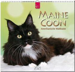 Maine Coon – Amerikanische Waldkatze
