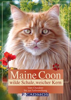 Maine Coon – Wilde Schale weicher Kern von Malcus,  Kerstin
