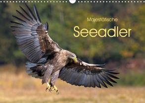 Majestätische Seeadler (Wandkalender 2020 DIN A3 quer) von Weiß,  Elmar