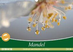 Mandel – Heilkraft zum Knacken (Wandkalender 2018 DIN A3 quer) von Hilger,  Axel