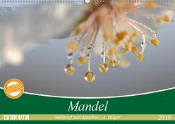 Mandel – Heilkraft zum Knacken (Wandkalender 2019 DIN A2 quer) von Hilger,  Axel