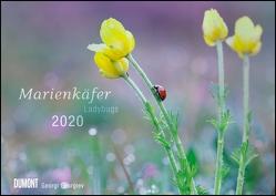 Marienkäfer – Ladybugs – Makrofotografie von Georgi Georgiev – Wandkalender – Format 42 x 29,7 cm von DUMONT Kalenderverlag, Georgiev,  Georgi