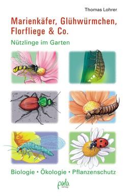 Marienkäfer, Glühwürmchen, Florfliege & Co. von Bauer,  Karin, Lohrer,  Thomas