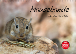 Mausebande (Wandkalender 2020 DIN A3 quer) von Di Chito,  Ursula