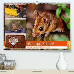 Mausige Zeiten! Putzige Gesellen mit Knopfaugen (Premium, hochwertiger DIN A2 Wandkalender 2020, Kunstdruck in Hochglanz) von Hurley,  Rose