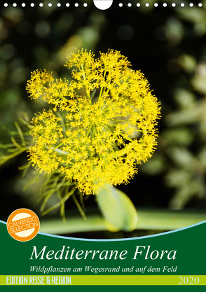 Mediterrane Flora (Wandkalender 2020 DIN A4 hoch) von Schmitt,  Georg
