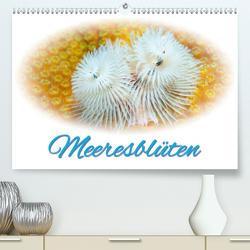 Meeresblüten (Premium, hochwertiger DIN A2 Wandkalender 2020, Kunstdruck in Hochglanz) von Smith,  Sidney