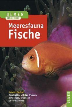Meeresfauna Rotes Meer, Indischer Ozean (Malediven) von Göthel,  Helmut