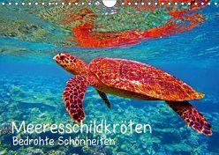 Meeresschildkröten – Bedrohte Schönheiten (Wandkalender 2019 DIN A4 quer) von Hess,  Andrea