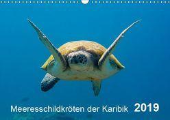 Meeresschildkröten der Karibik (Wandkalender 2019 DIN A3 quer) von - Yvonne & Tilo Kühnast,  naturepics
