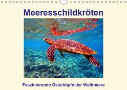 Meeresschildkröten – Faszinierende Geschöpfe der Weltmeere (Wandkalender 2019 DIN A4 quer) von Hess,  Andrea