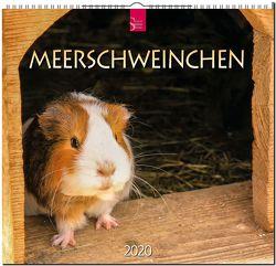 Meerschweinchen von Redaktion Verlagshaus Würzburg,  Bildagentur