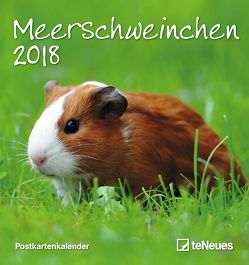 Meerschweinchen Postkartenkalender 2018