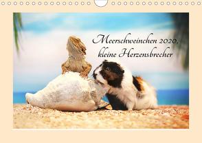 Meerschweinchen 2020, kleine Herzensbrecher (Wandkalender 2020 DIN A4 quer) von Foto Grafia Fotografie,  Anja