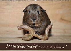Meerschweinchen – Kleine süße Fellnasen (Wandkalender 2019 DIN A2 quer) von Fischer,  Petra