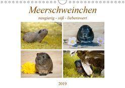 MEERSCHWEINCHEN neugierig – süß – liebenswert (Wandkalender 2019 DIN A4 quer) von Fischer,  Petra
