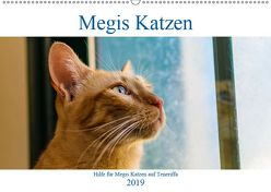 Megis Katzen (Wandkalender 2019 DIN A2 quer) von Kovac,  Megi