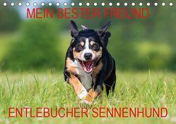 Mein bester Freund – Entlebucher Sennenhund (Tischkalender 2019 DIN A5 quer) von N.,  N.