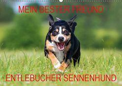 Mein bester Freund – Entlebucher Sennenhund (Wandkalender 2019 DIN A2 quer) von N.,  N.