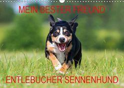 Mein bester Freund – Entlebucher Sennenhund (Wandkalender 2019 DIN A3 quer) von N.,  N.