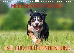 Mein bester Freund – Entlebucher Sennenhund (Wandkalender 2019 DIN A4 quer) von N.,  N.