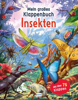 Mein großes Klappenbuch – Insekten von Green,  Rod, Love,  Mike