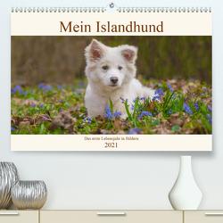 Mein Islandhund – das erste Lebensjahr in Bildern (Premium, hochwertiger DIN A2 Wandkalender 2021, Kunstdruck in Hochglanz) von Scheurer,  Monika