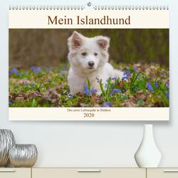 Mein Islandhund – das erste Lebensjahr in Bildern (Premium, hochwertiger DIN A2 Wandkalender 2020, Kunstdruck in Hochglanz) von Scheurer,  Monika