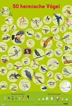 Mein Lernposter: 50 Heimische Vögel von Henkel,  Christine, Mähler,  Maria
