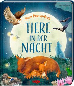 Mein Pop-up-Buch – Tiere in der Nacht von Davies,  Becky, Paulussen,  Lara, Storch,  Imke