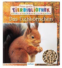 Meine große Tierbibliothek: Das Eichhörnchen von Brauner,  Anne, Ledu-Frattini,  Stéphanie