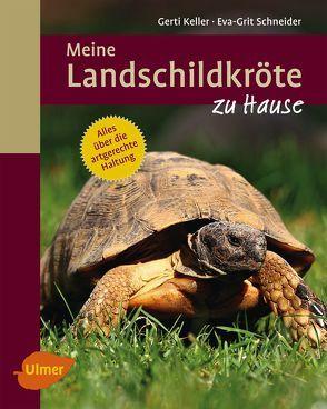 Meine Landschildkröte zu Hause von Keller,  Gerti, Schneider,  Eva-Grit