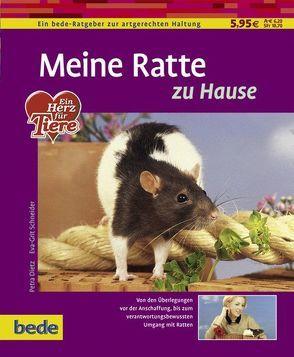 Meine Ratte zu Hause von Dietz,  Petra, Schneider,  Eva-Grit